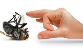 "<img src=""https://www.3l-sharq.com/wp-content/uploads/2015/03/مكافحة-حشرات.jpg"" alt=""وصف الصورة هنا""></img>"