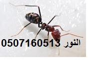 شركة مكافحة النمل بالدمام